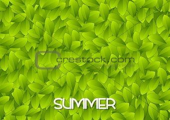 Abstract green summer leaves texture