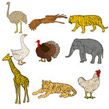 Sketch elephant, tiger, eagle, rooster, giraffe, ostrich, turkey, goose. chicken on a white background. Vector illustration