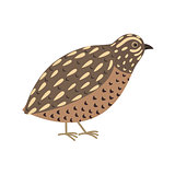 Quail bird. Cute cartoon character. Flat design. Isolated.
