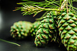 fir-cones on the black background