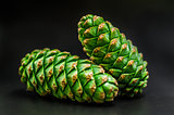 two fir-cones on the black background