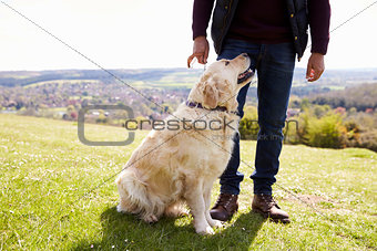 Close Up Of Golden Retriever On Walk In Countryside