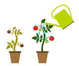 Garden Background Vector Illustration. Growing Bush of Tomatoes