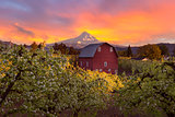 Sunset over Mt Hood and Red Barn