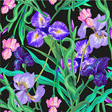 Seamless pattern with flowers. Iris. Lily. Vector. Hand drawn. Black background