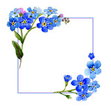 Wildflower myosotis arvensis flower frame in a watercolor style isolated.