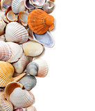 Natural background of seashells