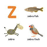 Cute zoo alphabet in vector.Z letter. Funny cartoon animals: zebra, zebrafish, zebrafinch
