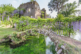 Ancient ruins and plants of wisteria in the Garden of Ninfa
