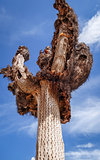Dry giant cactus in the desert, Argentina