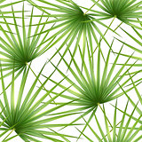 Talipot. Seamless tropical pattern of Palm branch and leaves. Vector illustration.