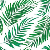 Seamless repeat coconut palm leaves. Realistic vector
