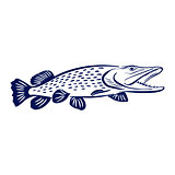 pike fish illustration