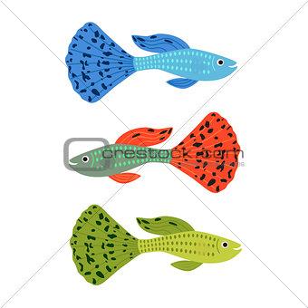 Beautiful guppy fish. vector