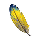 Hand drawn smoth, yellow and blur tropical, exotic bird feather
