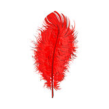 Hand drawn tender, fluffy red bird feather, sketch vector illustration