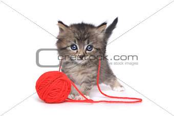 Tiny Kitten Playing With Red Ball of Yarn