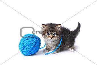 Kitten With Ball of Yarn in Studio