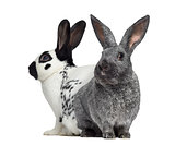 Checkered rabbit and Argente rabbit isolated on white