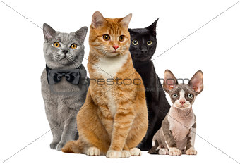Group of cats sitting, isolated on white