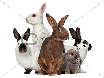 Group of rabbits, isolated on white