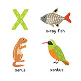 Cute Animal Zoo Alphabet. Letter X for x-ray fish, xantus, xerus