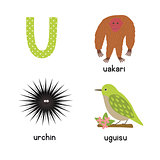 Cute zoo alphabet in vector. U letter. Funny cartoon animals: urchin, uakari, uguisu