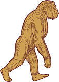 Homo Habilis Walking Side Drawing
