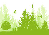 Nature background with firs