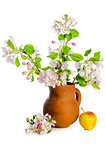 Branch of blossoming apple-tree in clay pitcher on white backgro
