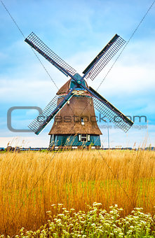 Old Dutch mill with yellow wheat
