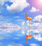 Flamingo on blue water