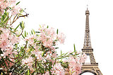 Eiffel tower and pink flowers