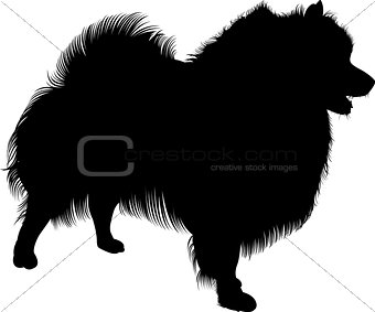 Black silhouette of spitz. Vector. isolated on white background. Spitz dog