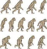 Homo Habilis Walking Cycle Collection Set