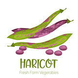 Vector haricot isolated on white background.Vegetable illustration for farm market menu. Healthy food design poster. Cartoon style vector illustration