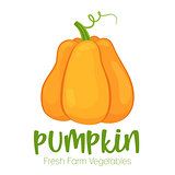 Vector pumpkin isolated on white background.Vegetable illustration for farm market menu. Healthy food design poster. Cartoon style vector illustration