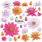 Lotus floral illustration