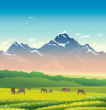 Cow, grass, mountain. Summer landscape.