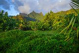 Moorea island jungle and mountains landscape