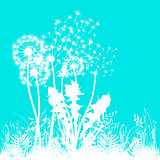 White Dandelion on turquoise