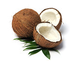 coconut close up