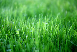Photo of a bright green grass