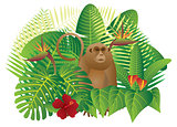 Tropical Rainforest  Jungle Monkey Illustration