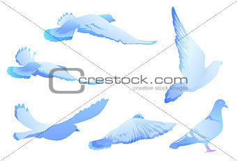Blue bird pigeon flies. Set of silhouettes