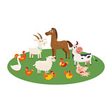 Farm animals grazing in the pasture, grazing on green lawn