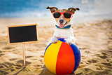 dog at the beach and ocean with plastic ball