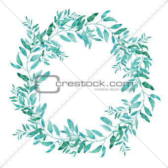 Olive wreath isolated on white background. Green tea tree leaves