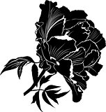 Peonies. Flowers peonies. Set of four vector silhouettes of hand