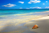 Sea shell on Caribbean beach.